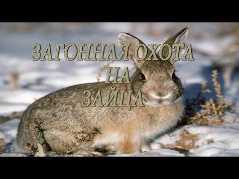 Цены Охоты на Кабана, Лося, Медведя, Волка