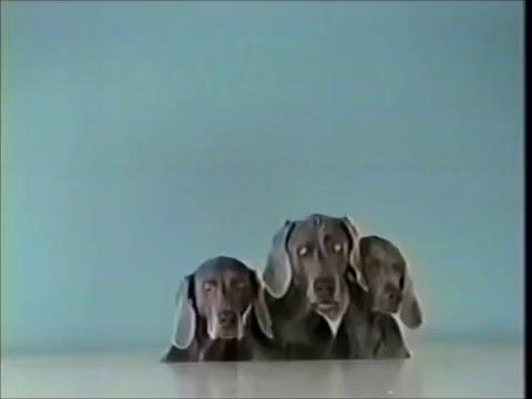 Sesame Street - William Wegman - Three Sliding Dogs