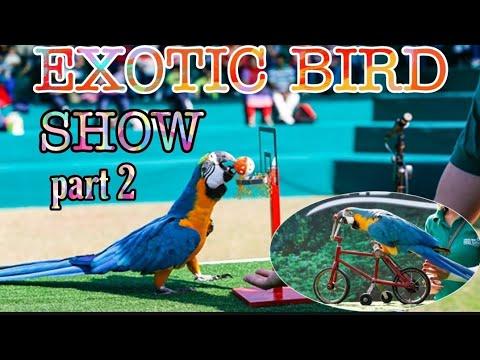 BIRD SHOW at DUBAI DOLPHINARIUM || Lhyn Barcz