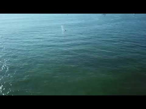 Whale hunt with mavic off long island