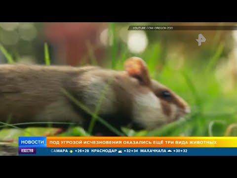 Вопрос: Какие животные оказались в России на грани вымирания?