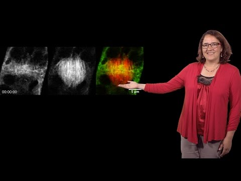 Magdalena Bezanilla (Dartmouth) 3: Myosin and actin steer plant cell division