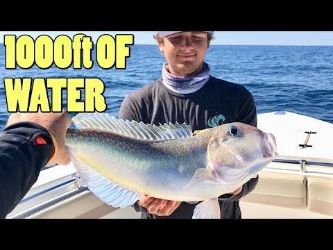 Catching Exotic Looking Fish In 1000ft Of Water