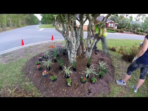 Landscape Bed Rehab    Weeding, Flowers, Mulch