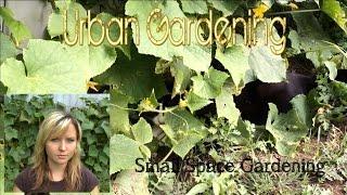 Small Space Urban Gardening