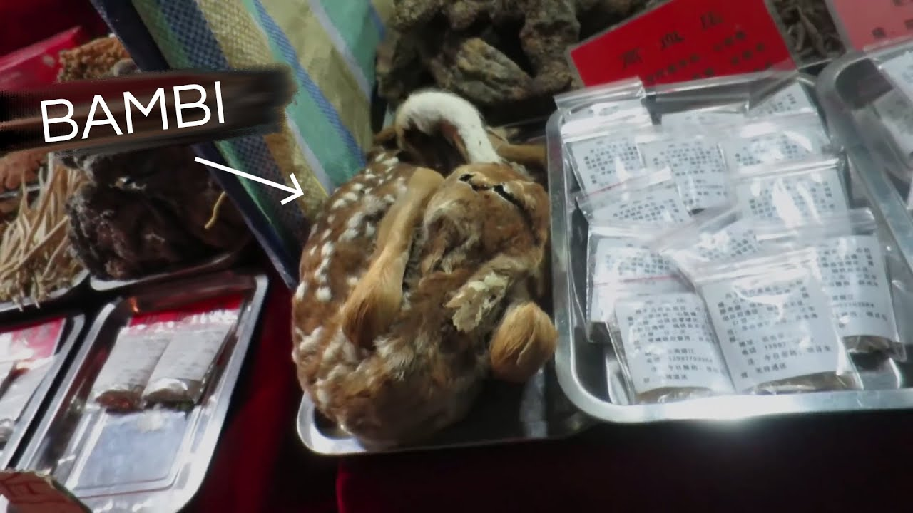 Chinese Market Exposed (Tiger Claw, Baby Turtles & More)