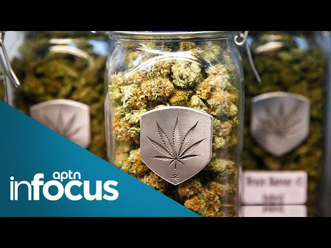 First Nation wants to become 'Tim Hortons of Cannabis' | APTN InFocus