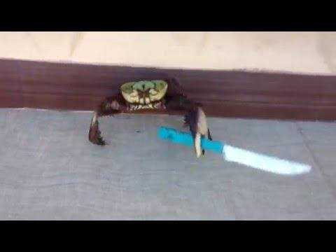 Hitler Crab