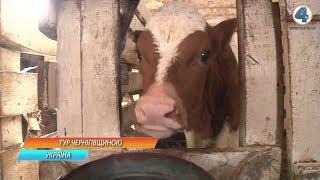 Дві корови і один кінь: як розпочиналось фермерське господарство на Черкащині