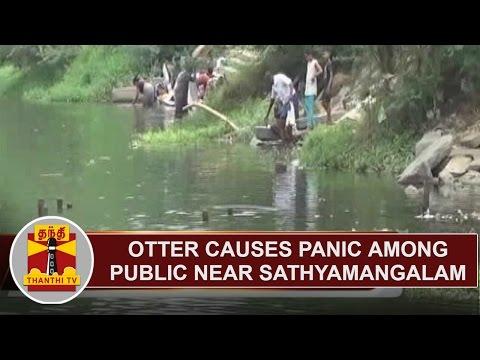 Otter causes Panic among Public near Sathyamangalam | Thanthi TV
