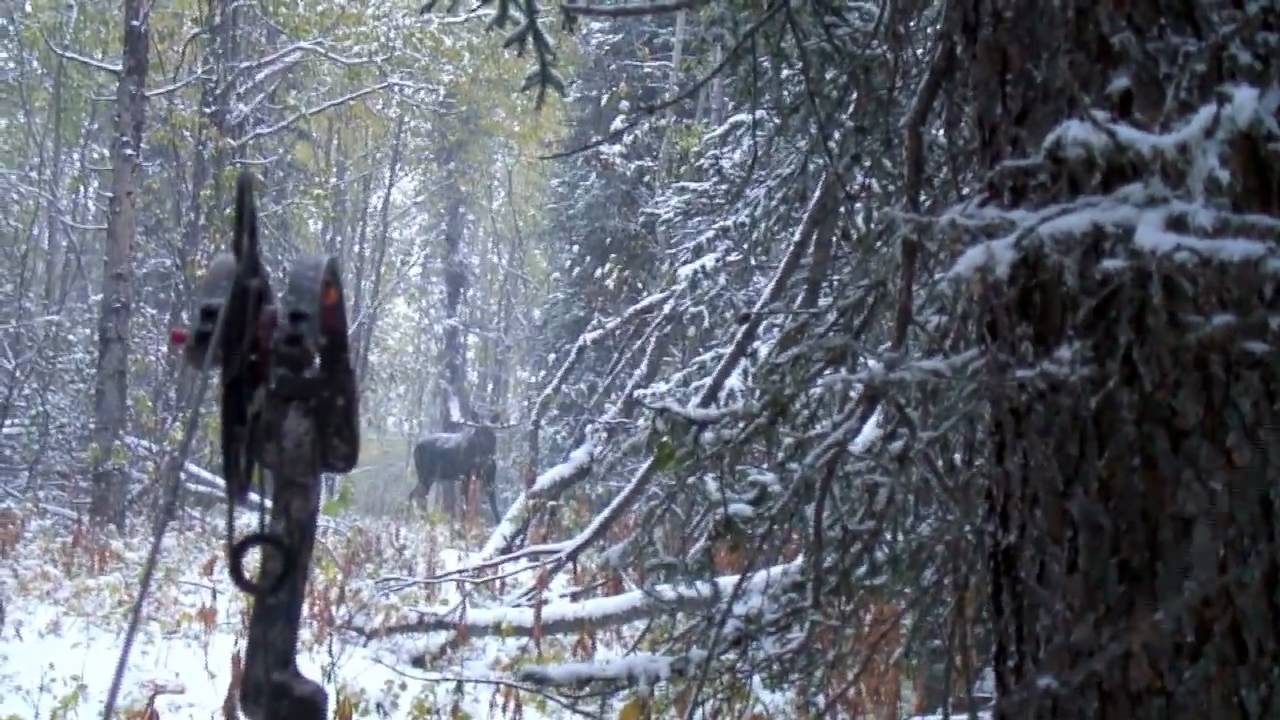 TIP # 3_Why you should use a Mathews Bow