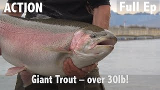 GIANT TROUT - OVER 30LB!