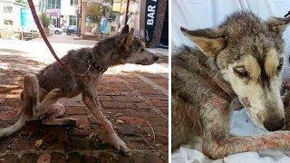 На асфальте лежала полуживая собака, скрывая под животом самое ценное сокровище…