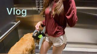 (ENG) 4k vlog 주말브이로그/강아지 Q&…