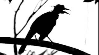 Bathory - The Ravens
