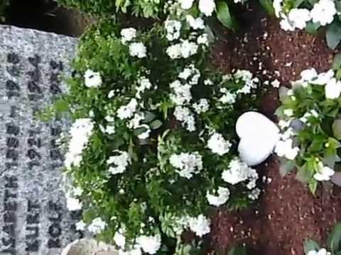 Wie Bepflanze Ich Ein Grab bildergebnis f r