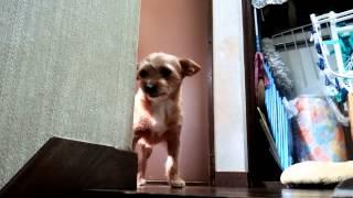 ミックス犬のメイです。 嬉しいと笑うのですが… カメラがあるので半笑い?