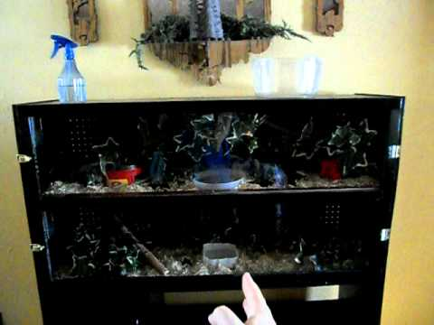 Entertainment Center Transformed Into Homemade Vivarium