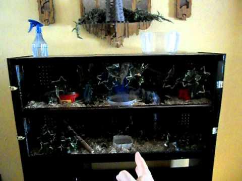 Entertainment center transformed into homemade vivarium - Part 2