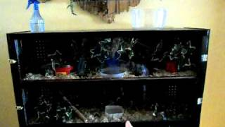Entertainment Center Transformed Into Homemade Vivarium - Part 2