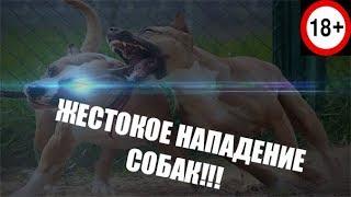 ЖЕСТОКОЕ НАПАДЕНИЕ СОБАК#2/CRUEL ATTACK OF DOGS # 2