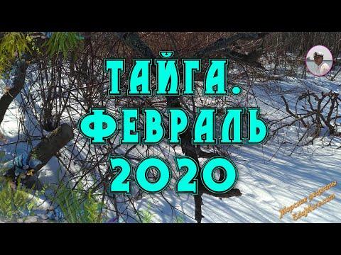 Тайга. Февраль 2020. Покорение снежной сопки