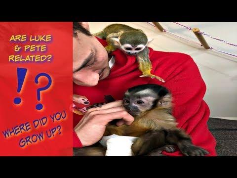 Baby Monkey oLLie Community Q&A
