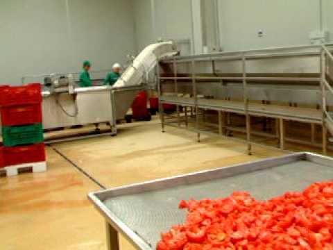 pomodoro semisecco-calibratore  pomodori per produzione semi-dry -www.davafood.it