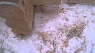 Срубы(Срубы из Псковской области:Чаша, Канадка, Норвежская рубка, Лафет. http://domlafet.ru http://vk.com/domlafet Russia log cabin, Russia log house., 2013-02-14T12:11:07.000Z)