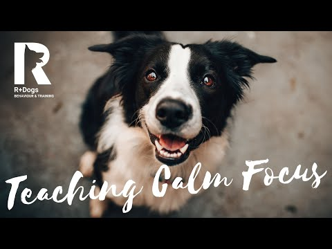 Teaching Calm Focus