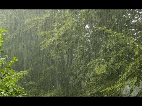 RAIN SOUND - (Black screen) 3 hours of Light Rain for sleep & relaxation.