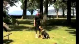Training K9 Dog With Muzzle