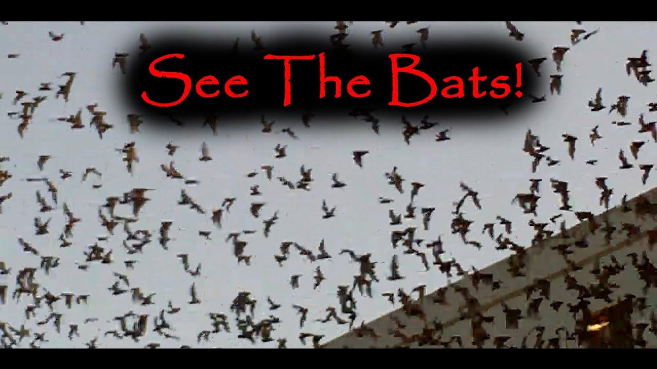 The Bats Of Round Rock Tx Mcneil Amp I 35 Bat Colony