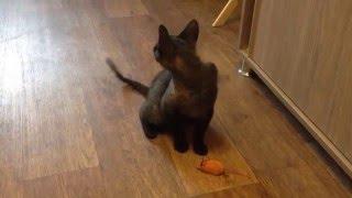 Котенок играет игрушечной мышкой.Кот. kitten plays. интересное видео про животных смотреть