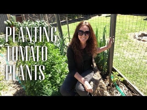 It's Time to Plant the Tomatoes