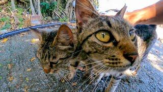 海辺の駐車場の野良猫たちが競い合う様に撫でられにきてカワイイ