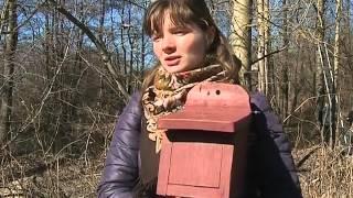 Смотреть видео Телеканал «Санкт Петербург» — Новости — Домики для летучих мышей онлайн