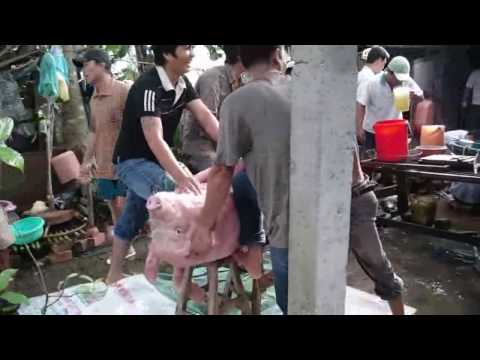 Pig Slaughter in Vietnam - Preparing for a wedding feast