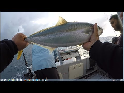 Chasing Sydney Kingfish With Raptor Charters.