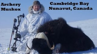 Muskox bow kill in Nunavut Canada