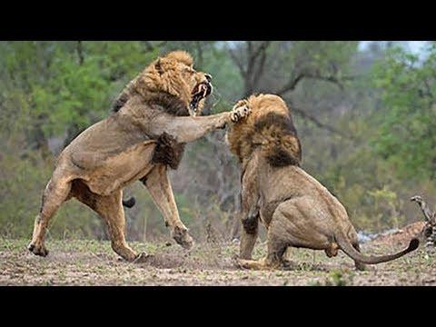 Dore Ubwenge bw' inyamaswa zo mu KAGERA National Park