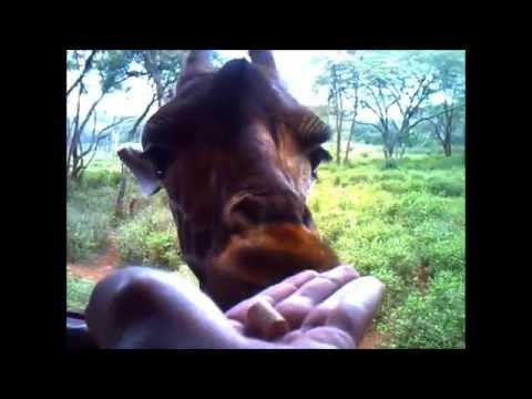 My Kenya & Ethiopia 2014 trip
