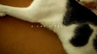 A Cat's Tale | Official Music Video