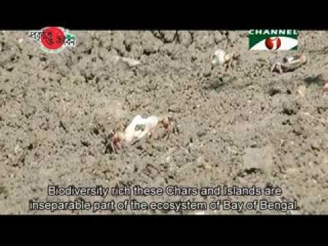 Nature and Life Episode 152 (Ecosystem of Bay of Bengal)