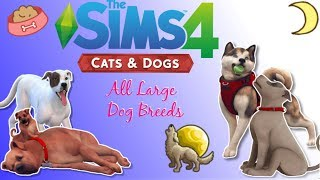 The Sims 4 Breeds