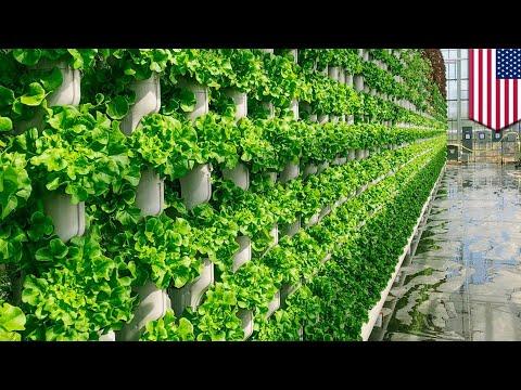Vertical farming company to grow local produce for Texas - TomoNews