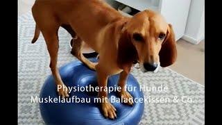 "Hundephysiotherapie - ""BalanceAkt"" Muskelaufbau beim Hund"