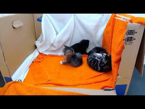 Kittencam - '24/7' kitten live-stream