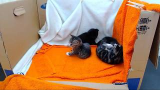 Kittencam - 247 kitten live-stream