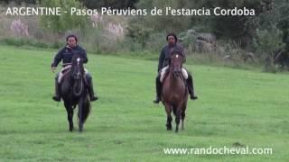 ARGENTINE - Cheval Paso Péruvien dans notre estancia Cordoba - Un voyage Randocheval